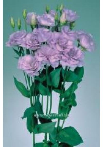 Еустома насіння  Echo Lavender