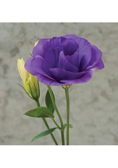 Еустома насіння  Mariachi® Blue