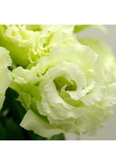 Еустома насіння  Mariachi®  Lime Green