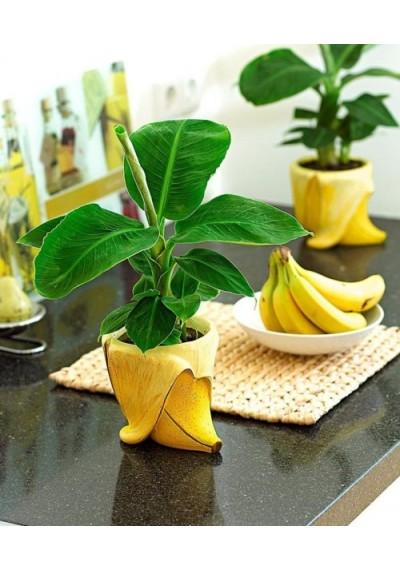 Банан 6 міс